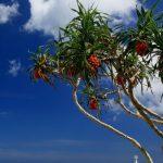 いい天気~サンマリーナビーチの写真など