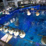 久しぶりの美ら海水族館