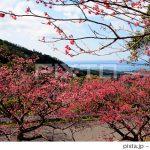 季節外れの桜の写真が売れました