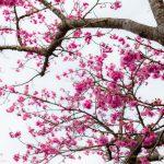桜→カフェ開拓