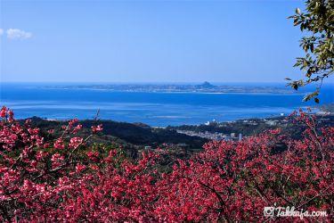 さくらと伊江島