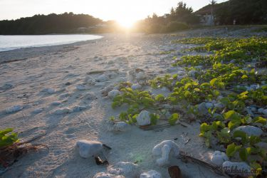 阿嘉島 前浜